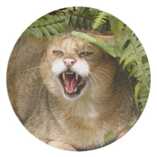 Jungle Cat 01 9x9 Dinner Plate