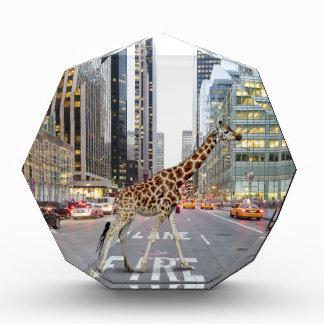 jungle city acrylic award