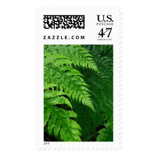 Jungle Ferns Postage Stamp