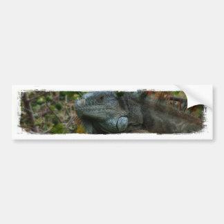Jungle Iguana Car Bumper Sticker