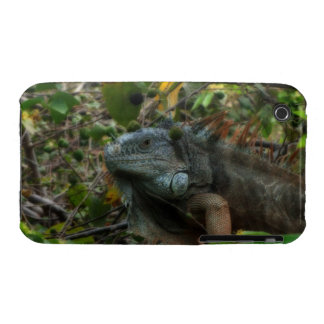 Jungle Iguana iPhone 3 Case