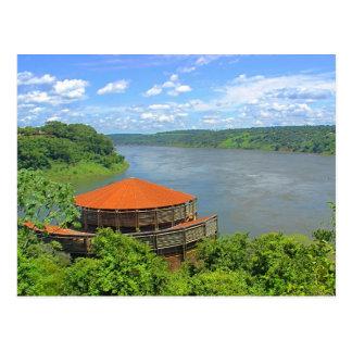 Jungle in Brazil Postcard