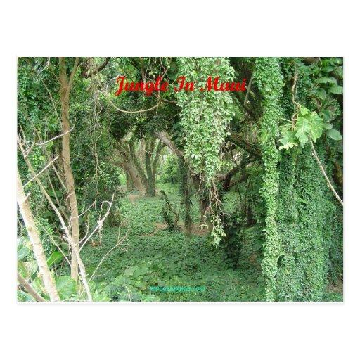 Jungle in Maui Postcard