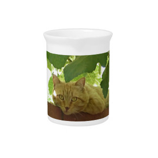 Jungle Kitty Cat Beverage Pitchers