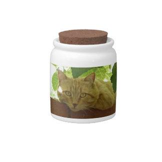 Jungle Kitty Cat Candy Jar