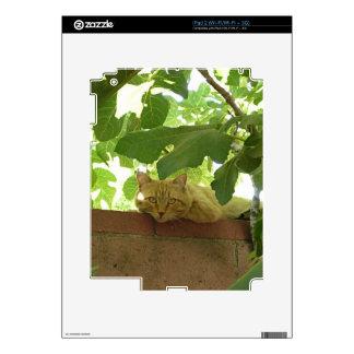 Jungle Kitty Cat iPad 2 Decal