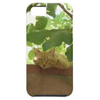 Jungle Kitty Cat iPhone 5 Case