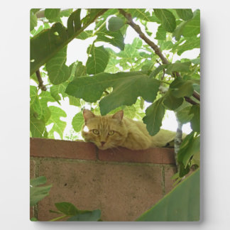Jungle Kitty Cat Photo Plaques