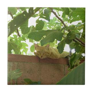 Jungle Kitty Cat Tiles