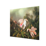Jungle orchids and hummingbirds, 1872 canvas prints