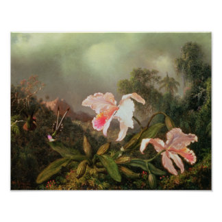 Jungle orchids and hummingbirds, 1872 poster