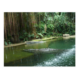 Jungle Postcard