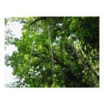 Jungle Ropes Tropical Rainforest Photo
