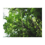 Jungle Ropes Tropical Rainforest Photo Canvas Print
