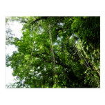 Jungle Ropes Tropical Rainforest Photo Postcard