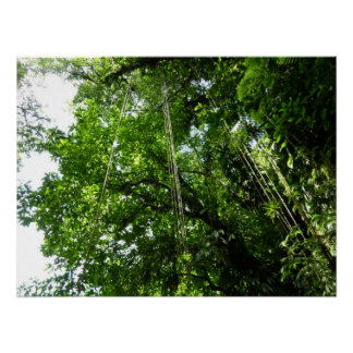 Jungle Ropes Tropical Rainforest Photo Poster