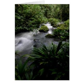 Jungle Stream River Landscape Amazon Card