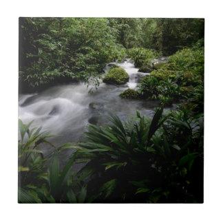 Jungle Stream River Landscape Amazon