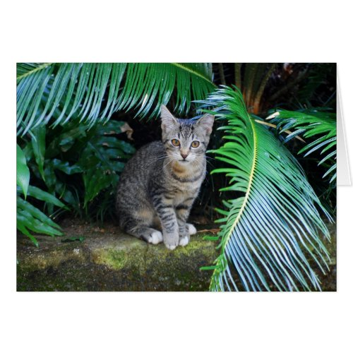 Jungle Tabby Kitten Card
