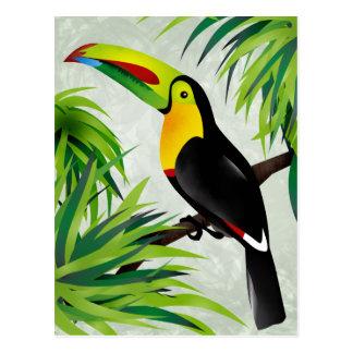 Jungle Toucan Postcards