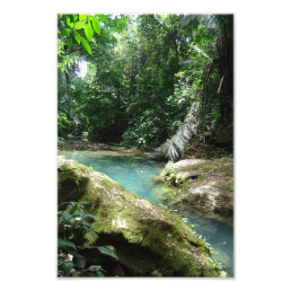 Jungle waters in Belize Central America Photo Print