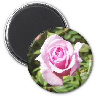 Junio subió - rosa imán de frigorifico