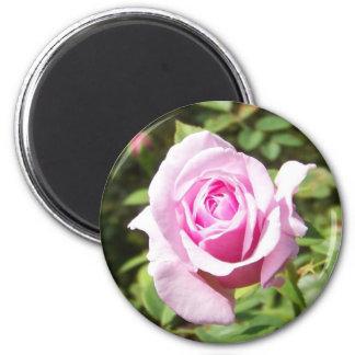 Junio subió - rosa iman de frigorífico