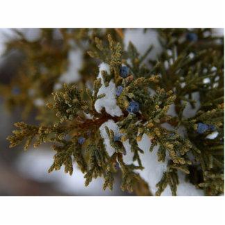 Juniper Berries Photo Cut Outs