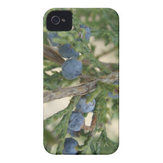 Juniper Berry Blackberry Bold Case-mate