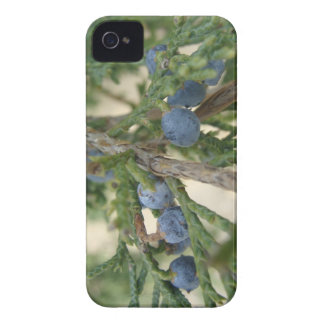 Juniper Berry iPhone 4 Case-Mate