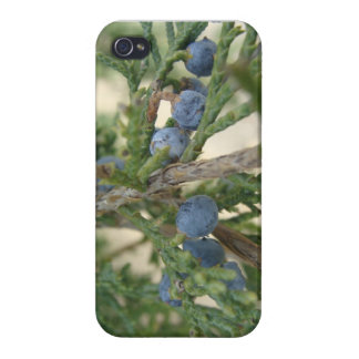 Juniper Berry iPhone 4 Savvy Case