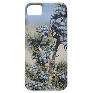 Juniper berry photo iPhone SE/5/5s case