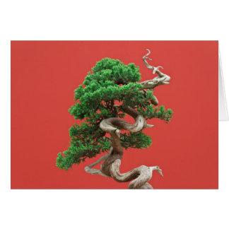 Juniper bonsai card