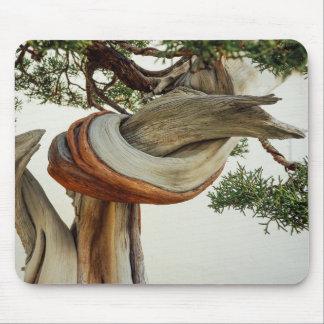 Juniper bonsai detail mouse pad