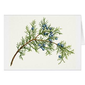 Juniper Branch Cards