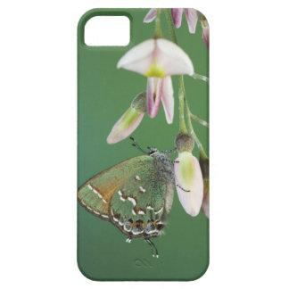 Juniper Hairstreak, Callophrys gryneus, adult on iPhone SE/5/5s Case