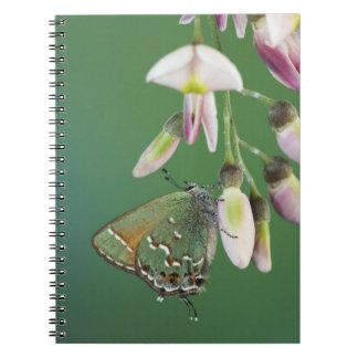 Juniper Hairstreak, Callophrys gryneus, adult on Spiral Notebook