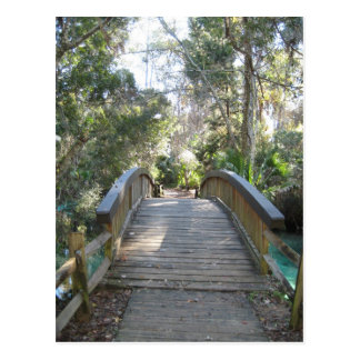 Juniper Springs, Fl (Ocala National Forest) Postcard