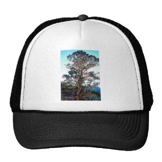 Juniper Tree in Georgia Trucker Hats