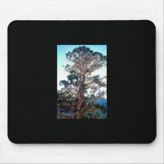 Juniper Tree in Georgia Mouse Pad
