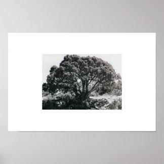 Juniper Tree Poster