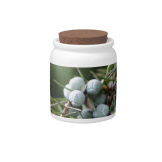 Juniperus berries on a tree candy dishes