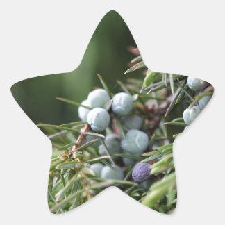 Juniperus berries on a tree star sticker