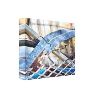 Junkyard Wren  canvas wrap