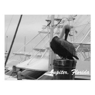 Jupiter, Florida Pelican photo postcard