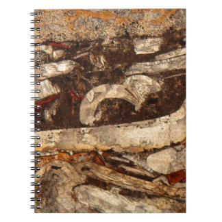 Jurassic shells under the microscope notebook