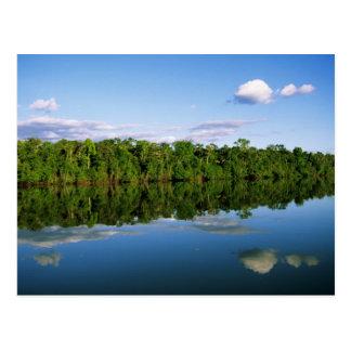 Juruena, Brazil. Forested river bank reflected Postcard