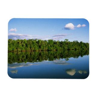 Juruena, el Brasil. Orilla del río boscosa refleja Imanes