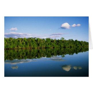 Juruena, el Brasil. Orilla del río boscosa refleja Tarjetón
