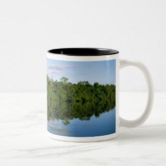 Juruena, el Brasil. Orilla del río boscosa refleja Tazas